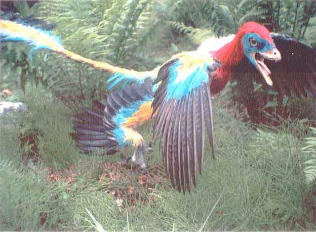 Bird evolution  creationcom